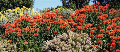 siepi fiorite siepe fiorita ottieni una siepe sempreverde fiorita