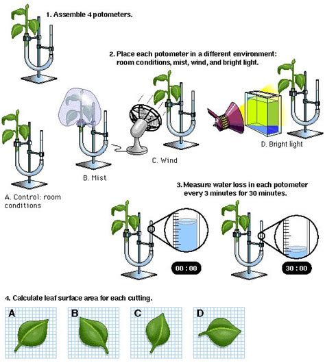 design experiment biology spm how to design an experiment ask com image search
