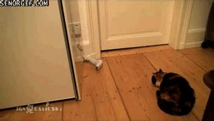 sock cat gif cat sock gif by cheezburger find on giphy