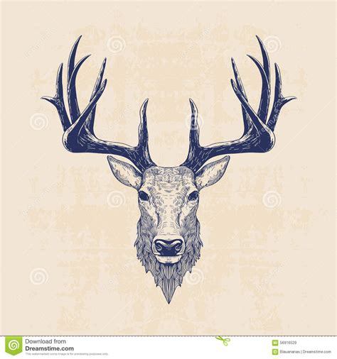 deer head stock vector image 56916529