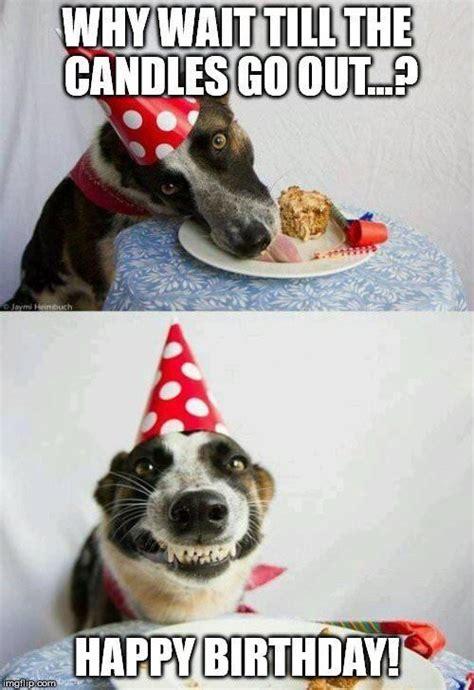 Happy Birthday Meme Dog - 17 amusing happy birthday meme dog pictures greetyhunt