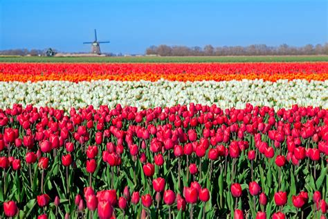 netherlands tulip fields netherland s flower route is the real heaven on earth