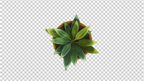 top view of a plant growing animation by se5d videohive