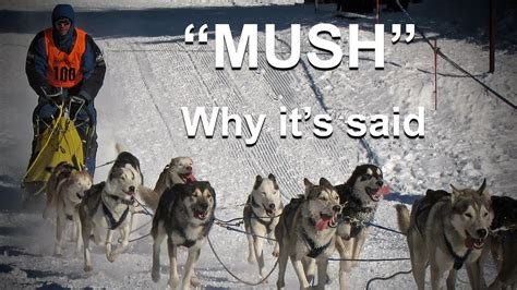 how to make puppy mush erudition why do they say quot mush quot to make sled dogs go