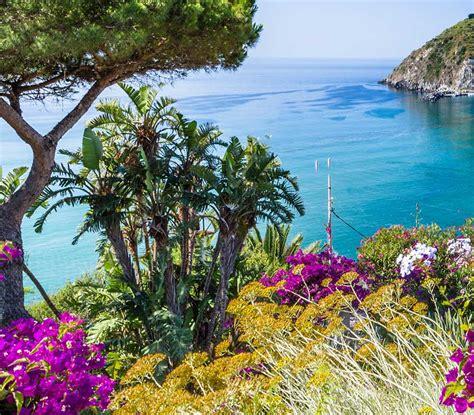fiori della macchia mediterranea la macchia mediterranea