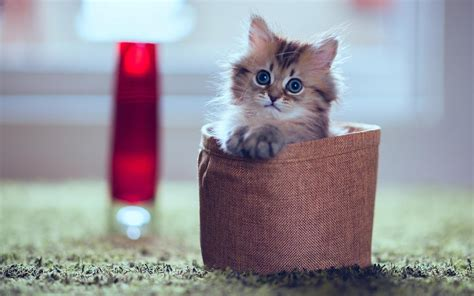 Kuas Cat 3in baby cat wallpaper hd android apps on play