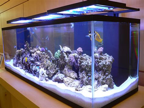 marine tank set up and open house