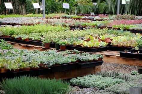 wholesale succulent nursery orange county los angeles