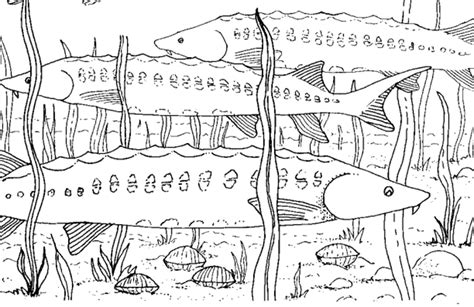 Piifa Zone Colouring Pages