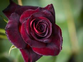 What To Put In A Vase Other Than Flowers Forget A Dozen Red Roses These Are The Best Flowers To