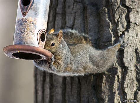 making bird feeders squirrel proof