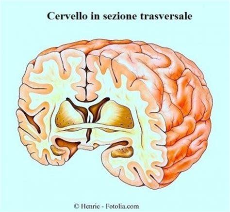 mal di testa e senso di vomito svenimento o sincope improvviso bambini gravidanza