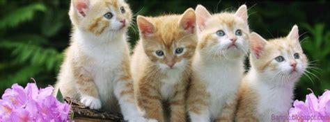 wallpaper anak kucing imut gambar anak kucing lucu dan imut terlengkap dp bbm unik
