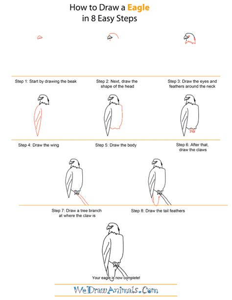 How To Draw A Bald Eagle For Beginners