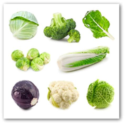growing cabbage   home garden
