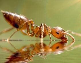 Ameisen Auf Der Terrasse 4711 by Ameisen Im Garten Ameisenplage Ameisen Bek 228 Mpfen So Gehts
