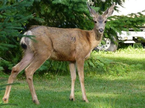 fotos de mam 237 feros informaci 243 n sobre los animales mam 237 feros informacion