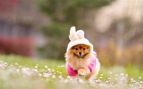 cute puppy wallpapers  desktop  images