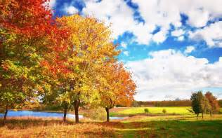 Fall Landscaping Wallpaper 793526