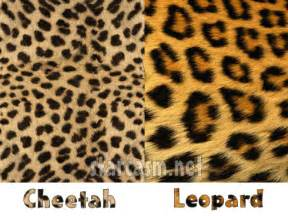 What Is The Difference Between A Leopard And A Jaguar Difference Between Leopard And Cheetah Print Photos