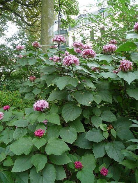 fragrant garden plants herbs to grow in your garden