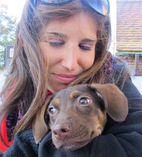 puppy adoption island adopt don t shop 7 island no kill animal shelters