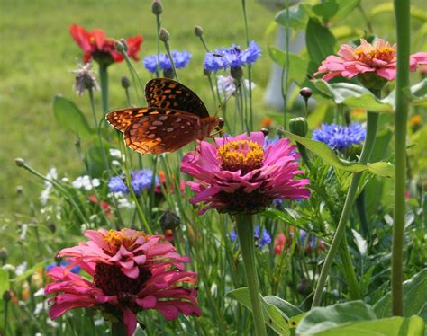 Butterfly Gardens by Butterfly Gardening Home Garden