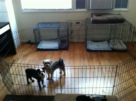 puppy apartment reviews puppy apartment reviews modern puppies