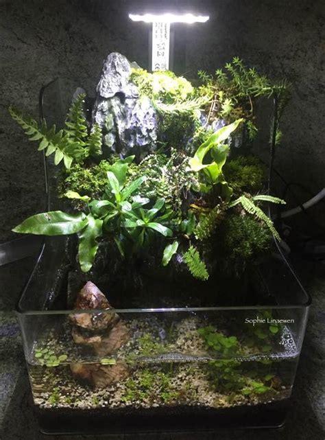 Lu Aquarium Arwana planty 25 a retirer dans notre magasin les nanos