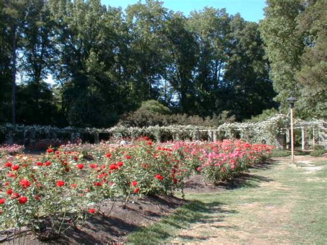 Garden Raleigh by Raleigh Nc Raleigh Garden Photo Picture Image