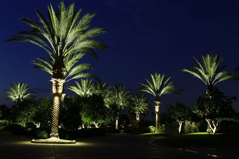 tree lights palm tree ring light roto lite inc led landscape lighting