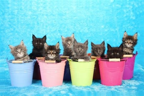 theme names for kittens help us give these 6 litters of kittens hysterical group