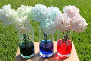 colored carnations desperate craftwives colored carnation experiment
