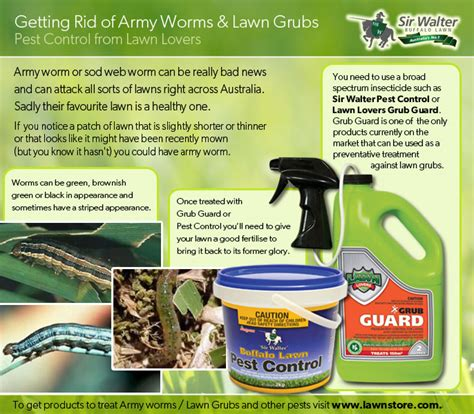 has your lawn got lawn grubs or army worms lawn care advice from loveyourlawn love your lawn
