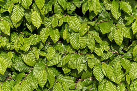 background for photos free image green leaves background libreshot