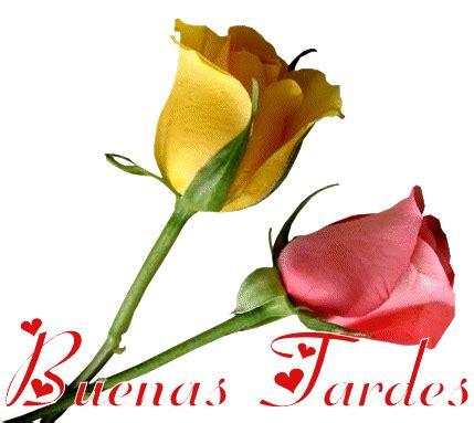 bellas flores amarillas y rojas mandarsaludoscom im 225 genes con frases para dar las buenas tardes feliz