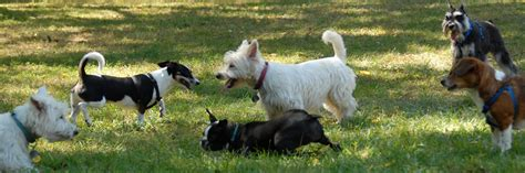 puppy park lucyblack morris county and denville nj parks