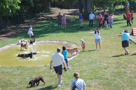 how to build a dog park in your backyard 7 places to take your dog for a delightful outing lifestyle fashion and make up