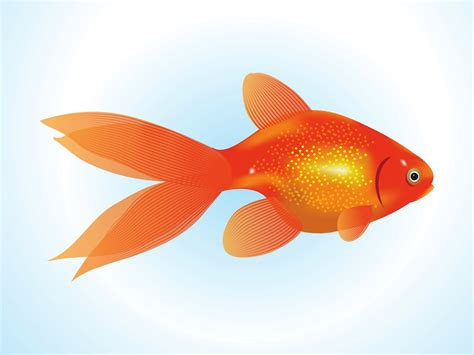 gold fish clip goldfish vector vector graphics freevector