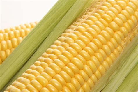 Sweet corn sometimes referred to as table corn is so named