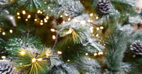 where to buy the best christmas trees in cambridge