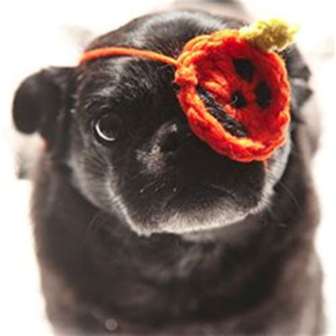 one eyed pug for sale 17 best images about you so pugly on pug humor pug and pug