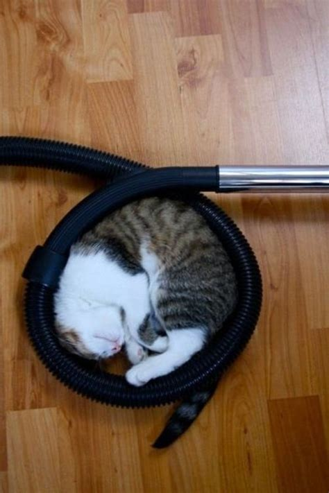 8 Places Cats Like To Sleep by Cats Sleeping In Places Animals Zone