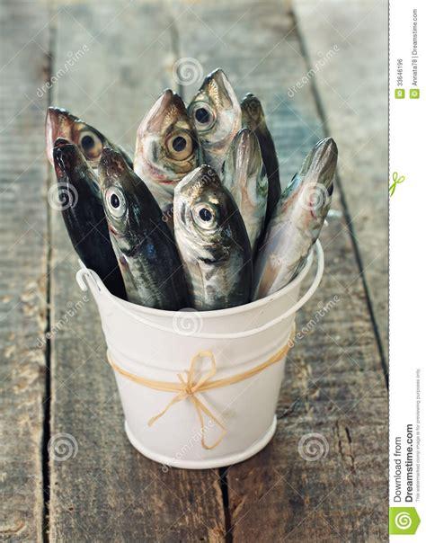 raw fish scad  bucket stock photo image  pail