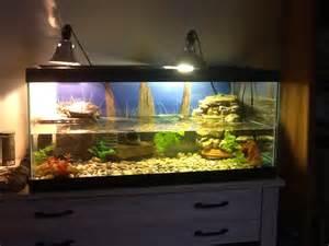 red eared slider tank setup turtle aquariums