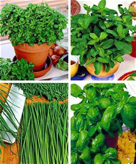 Herbes Aromatiques Cuisine Liste by Epices Herbes Plantes Aromatiques De Cuisine