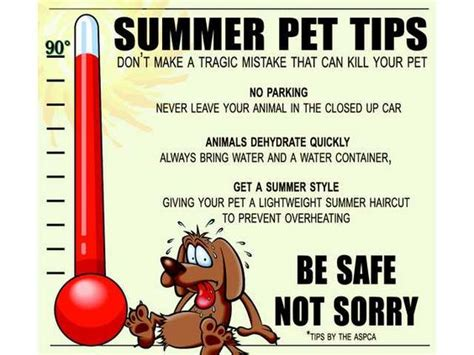 9 Tips On Keeping Your Outside Pet Safe From The Cold by Pet Tips Pets And Pet Safe On