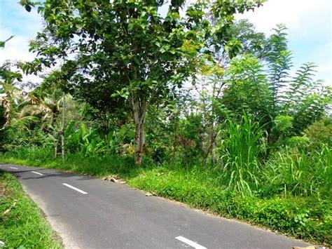 Sale Aspal Lebar property tanah dijual di ubud 30 are view sungai dan