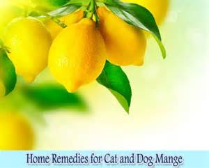 home remedies for mange home remedies for cat and mange