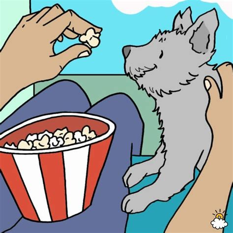 popcorn for dogs can dogs eat popcorn yes and no